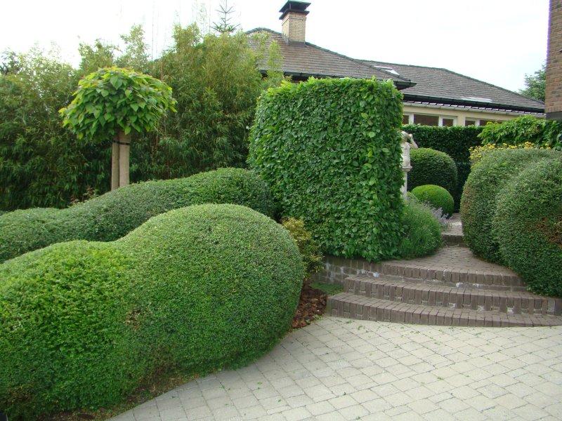 privacy in tuin creeren beautiful de nieuwe kleine tuin